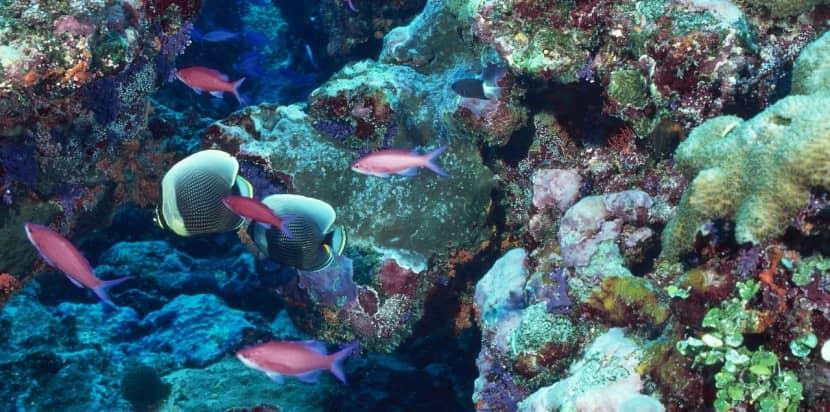 Inventan un coral Impreso en 3D para combatir el arrecife blanco