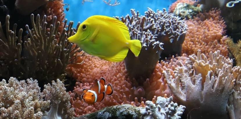 arrecife de coral vivo
