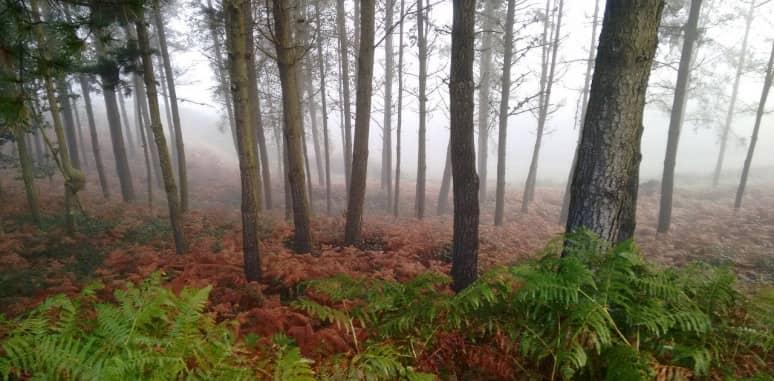 bosque con árboles de madera